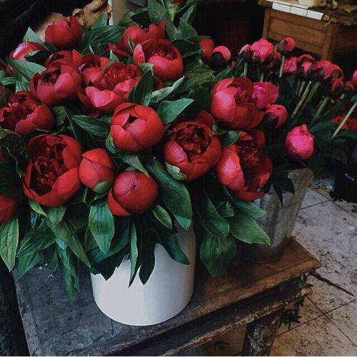 """PEONIES FOR LOVE … The """"King of Flowers"""" symbolising go..."""